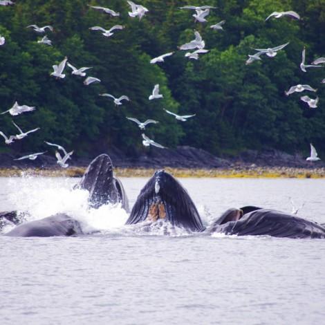 2015 Discover Southeast Alaska