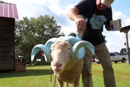 A Day in the Life of Rameses