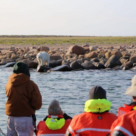 2017 Polar Bears and Beluga Whales
