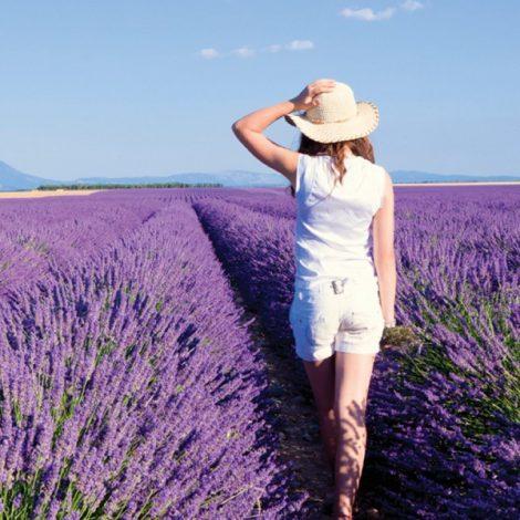 2017 Walking Through Provence
