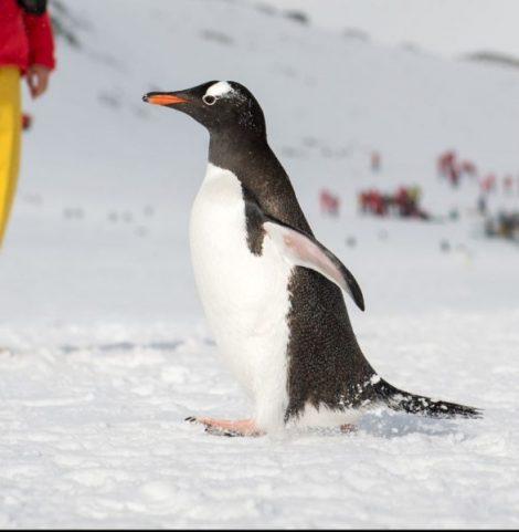 2018 Astounding Antarctica