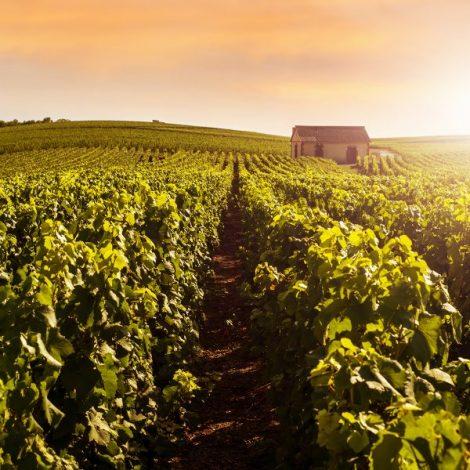 2018 France's Champagne Region