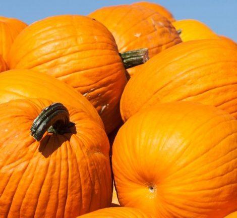 Creedmoor: Fall Family Fun Day