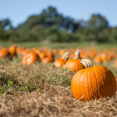 Cary: Fall Fun Day on the Farm