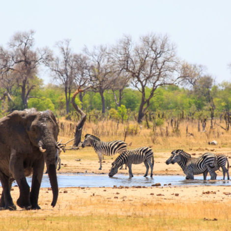 2021 Journey to Southern Africa - Limited Availability