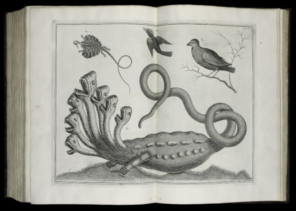 UNC Enriched by $6.2 Million Rare Books Collection