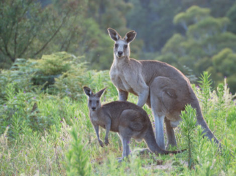 2021 Exploring Australia & New Zealand